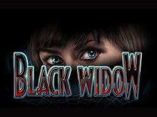 Популярная традиционная азартная игра Черная Вдова
